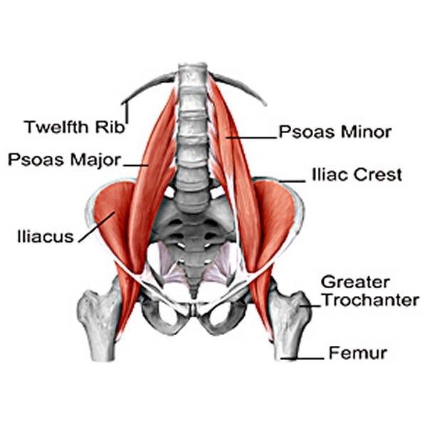 Psoas-musklen